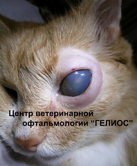 arterialnaya-gipertenziya-u-kota