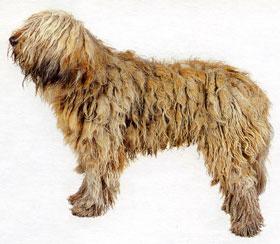 Общий вид крепкая собака среднего
