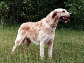 http://www.veterinar.ru/img/encycl/fs_0112.jpg